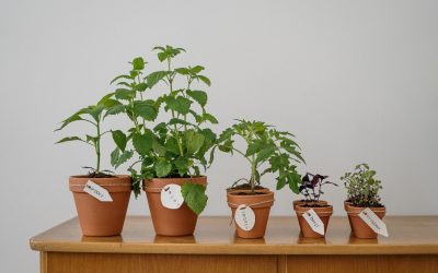 Ønsker du det bedste for dine planter?